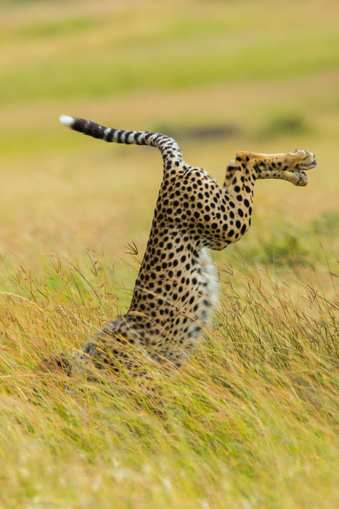 Funny Winners of the Comedy Wildlife Photography Awards 2015 09 682x1024 13 Funny Winners of the Comedy Wildlife Photography Awards 2015
