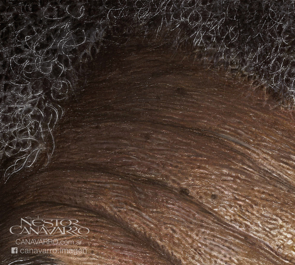 Super Detailed Drawing Color Pencils 1024x921 Super Detailed Drawing Of Morgan Freeman In Color Pencils