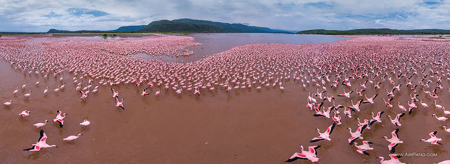 Aerial Photography of Flaminggo Lake Bogoria Kenya Russian Photographers Show How Birds See Our World And It'll Leave You Breathless