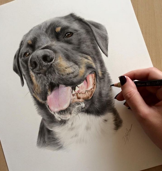 Amazing Animal Pencil Drawings by British Artist Danielle Fisher Incredible Animal Pencil Drawings by British Artist Danielle Fisher