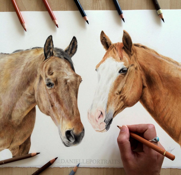 Animal Pencil Drawings by British Artist Danielle Fisher 12 Incredible Animal Pencil Drawings by British Artist Danielle Fisher