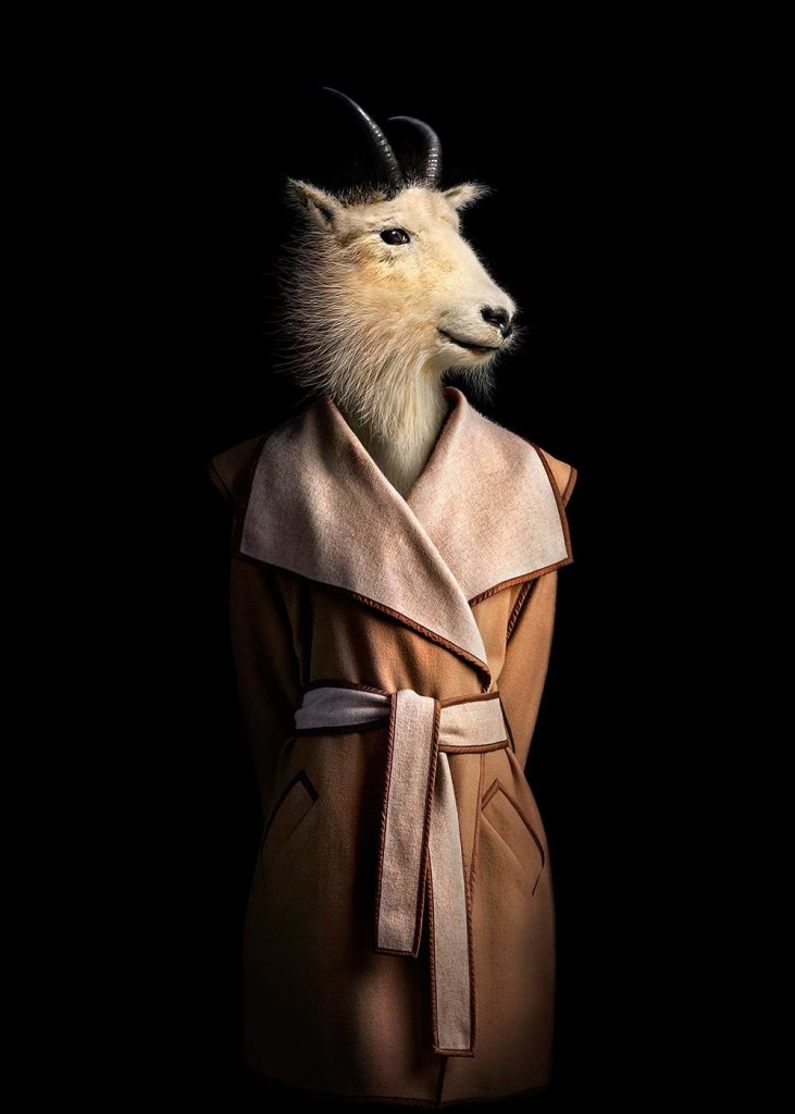 Animals Dressed in Contemporary Outfits by Miguel Vallinas 04 731x1024 Animals Dressed in Contemporary Outfits by Miguel Vallinas