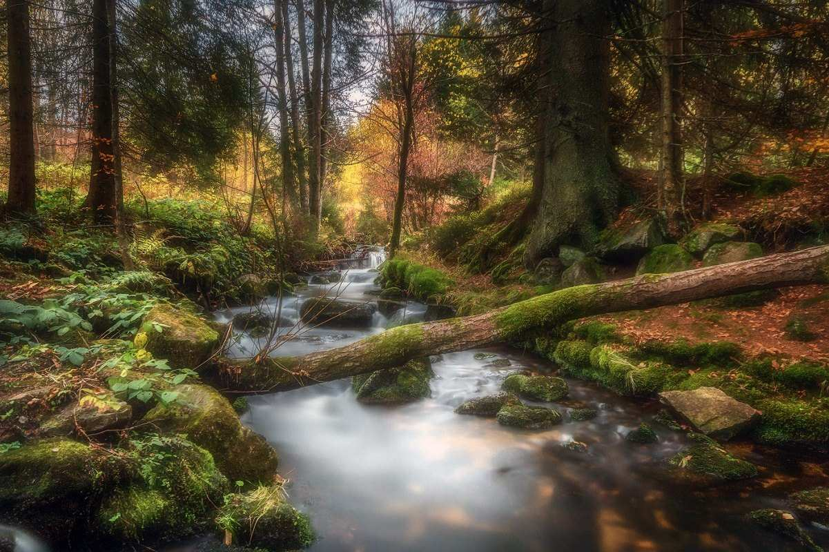Beautiful forest landscape photography by daniel herr 01 for Landscape images
