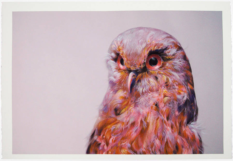 Beautiful Owl Watercolor Paintings by John Pusateri Wonderful Owl Watercolor Paintings by  John Pusateri