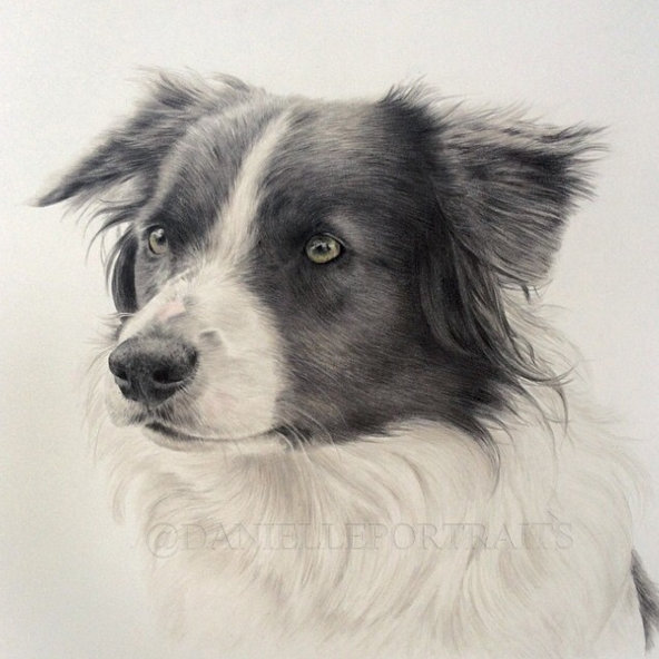 Beauty Animal Pencil Drawing Ideas 36 Incredible Animal Pencil Drawings by British Artist Danielle Fisher