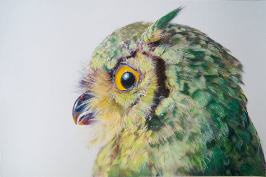 Beauty Owl Illustration by John Pusateri Wonderful Owl Watercolor Paintings by  John Pusateri