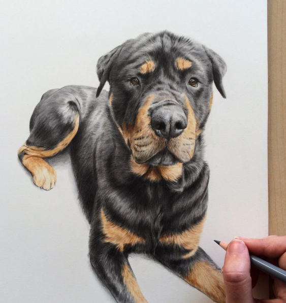Best Animal Pencil Drawings 12 Incredible Animal Pencil Drawings by British Artist Danielle Fisher