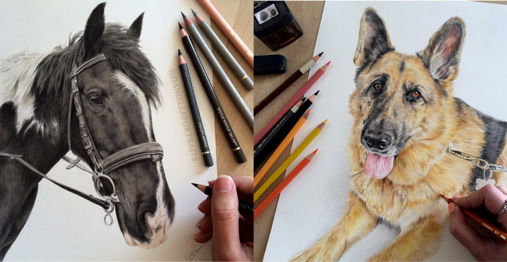 Incredible Animal Pencil Drawings by British Artist Danielle Fisher