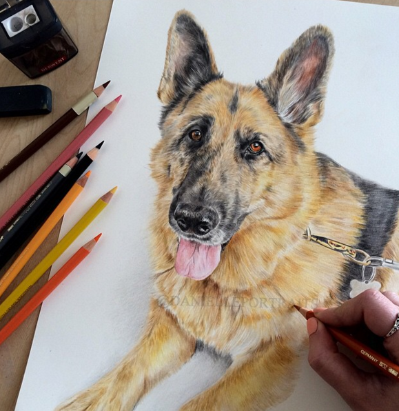 Best Animal Pencil Drawings by British Artist Danielle Fisher Incredible Animal Pencil Drawings by British Artist Danielle Fisher
