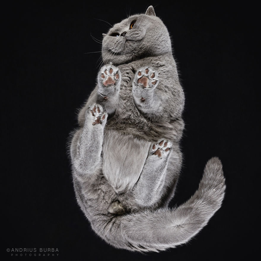 Cute Cat Photograph From Underneath by Andrius Burba 02