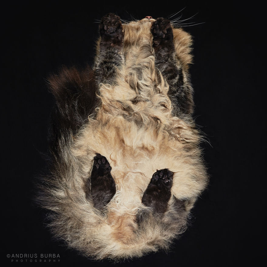 Cute Cat Photograph From Underneath by Andrius Burba 03
