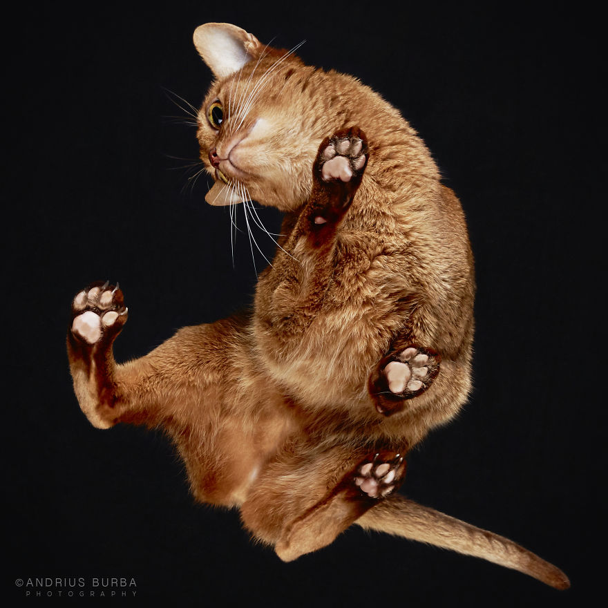 Cute Cat Photograph From Underneath by Andrius Burba 1