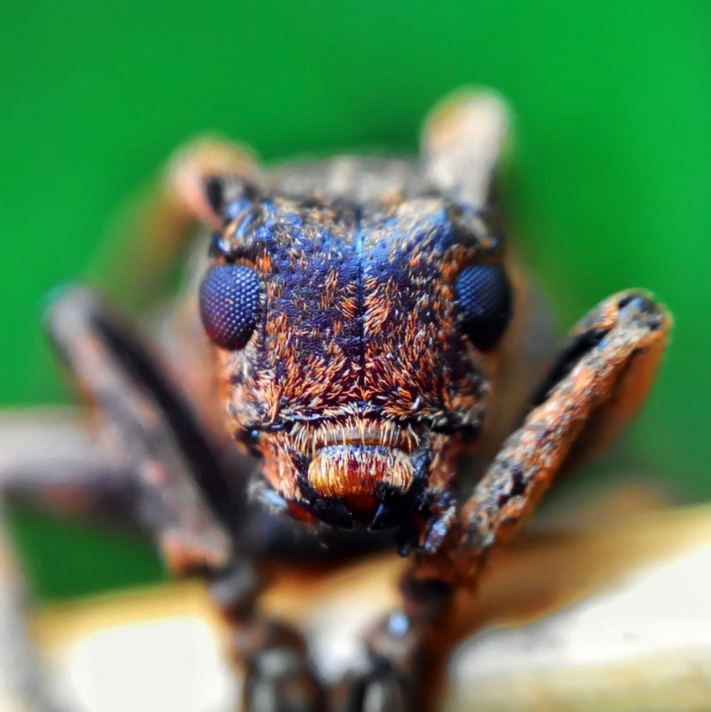 Extreme macro photo using smartphone 1022x1024 Wonderful Capture Macro Photography of Insect Using Smartphone