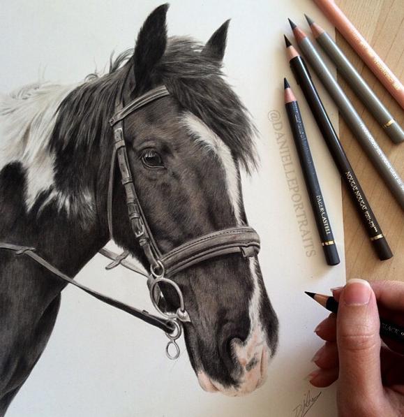 Incredible Animal Pencil Drawings Art 12 Incredible Animal Pencil Drawings by British Artist Danielle Fisher