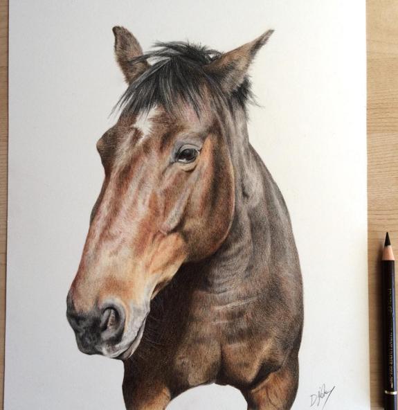 Incredible Animal Pencil Drawings Art 13 Incredible Animal Pencil Drawings by British Artist Danielle Fisher