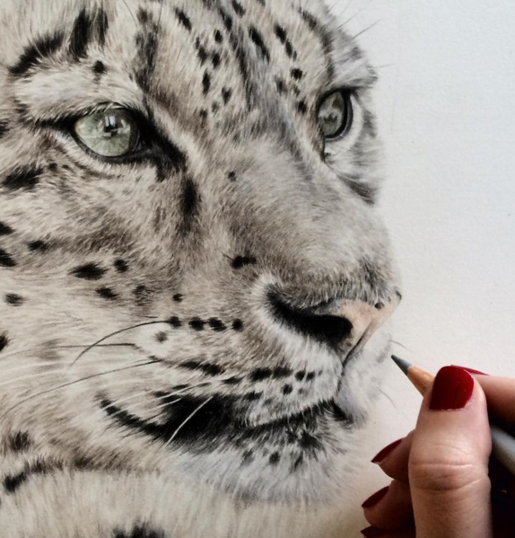 Incredible Animal Pencil Drawings by British Artist Danielle Fisher Incredible Animal Pencil Drawings by British Artist Danielle Fisher
