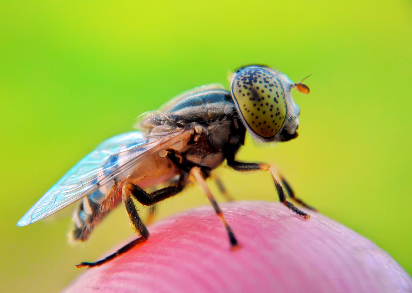 Wonderful Capture Macro Photography of Insect Using Smartphone