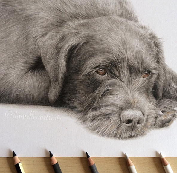 Mind Blowing Animal Pencil Drawings by British Artist Danielle Fisher 14 Incredible Animal Pencil Drawings by British Artist Danielle Fisher