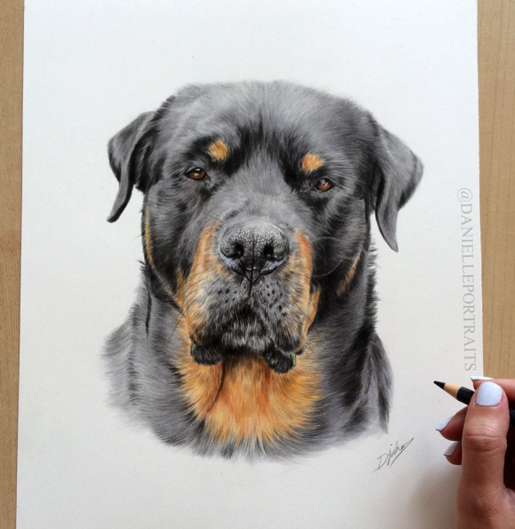 Realistic Animal Pencil Drawings by British Artist Danielle Fisher Incredible Animal Pencil Drawings by British Artist Danielle Fisher