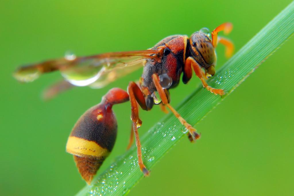 Smartphone macro photo 1024x683 Wonderful Capture Macro Photography of Insect Using Smartphone