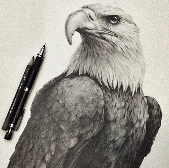 Stunning Animals Realistic Pencil Drawing Stunning Realistic Pencil Drawing of Animals by Jonathan Martinez