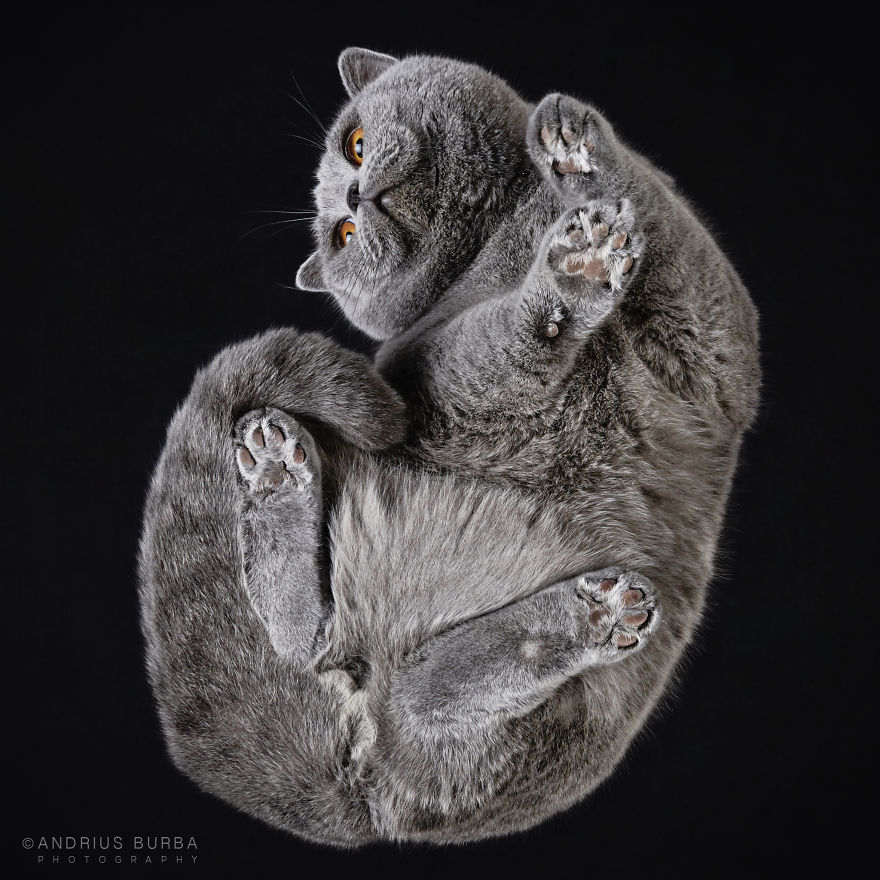 Unique Photography of The Cat From Underneath by Andrius Burba 01