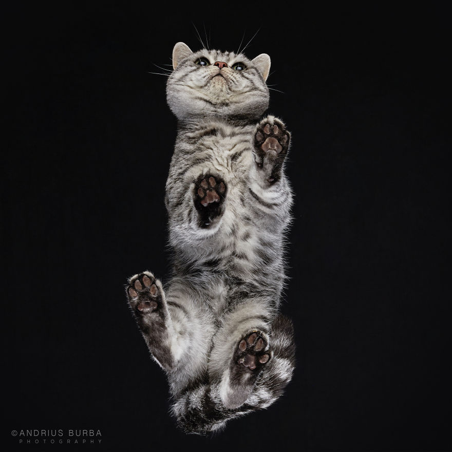 Unique Photography of The Cat From Underneath by Andrius Burba 03