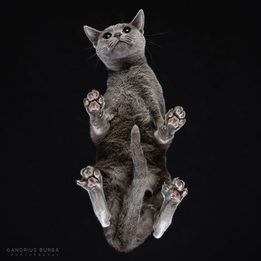 Unique Photography of The Cat From Underneath by Andrius Burba 05 Unique Photography of The Cat From Underneath by Andrius Burba