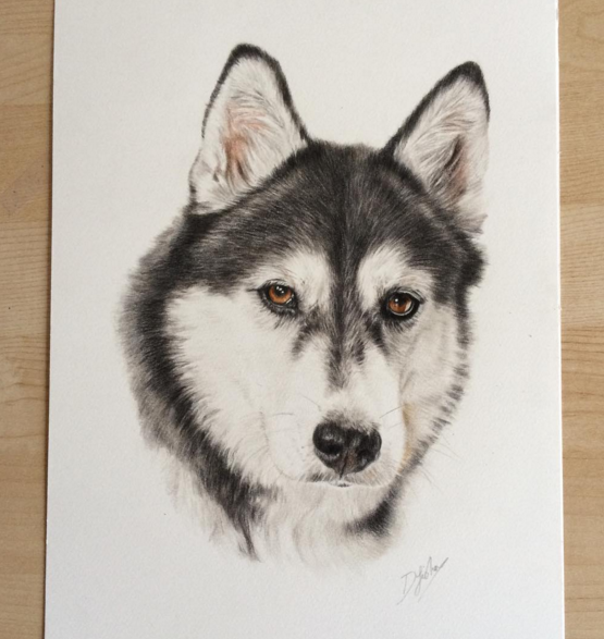 Wondeful Animal Pencil Drawings by British Artist Danielle Fisher Incredible Animal Pencil Drawings by British Artist Danielle Fisher