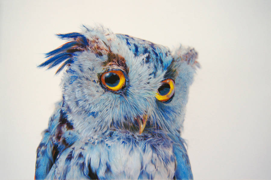 Wonderful Owl Illustration by John Pusateri Wonderful Owl Watercolor Paintings by  John Pusateri
