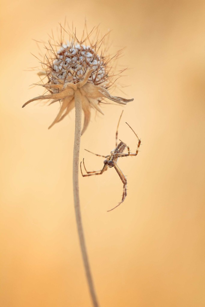 Aerial dancer by Ines Pereira Leonardo 683x1024 Winners of The International Garden Photographer of The Year