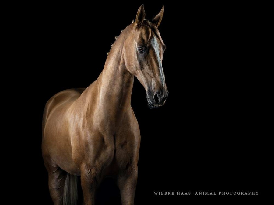 Beautiful Horse Portraits Photography 36 Stunning Horse Portraits Photography by Wiebke Haas
