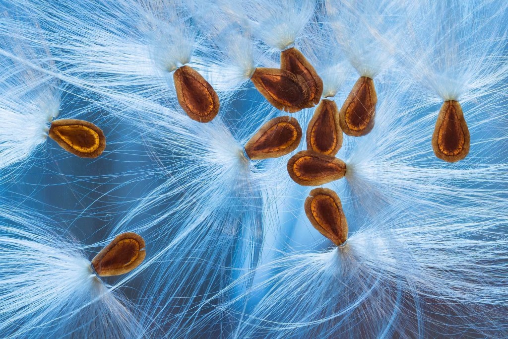 Christine Blanchin dos Santos snapped this collection of seed pods 1024x683 Winners of The International Garden Photographer of The Year