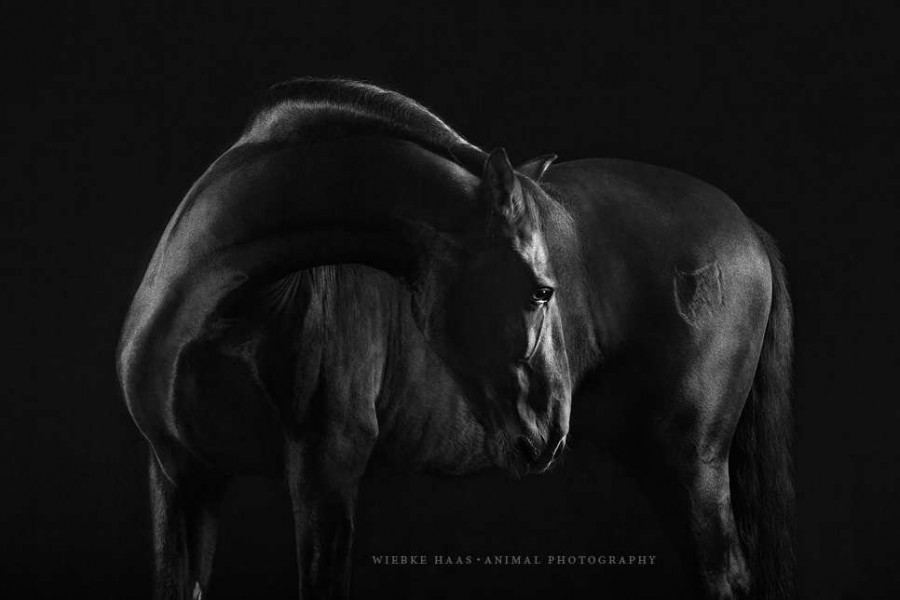 Elegant Horse Portraits Photography by Wiebke Haas 65 Stunning Horse Portraits Photography by Wiebke Haas