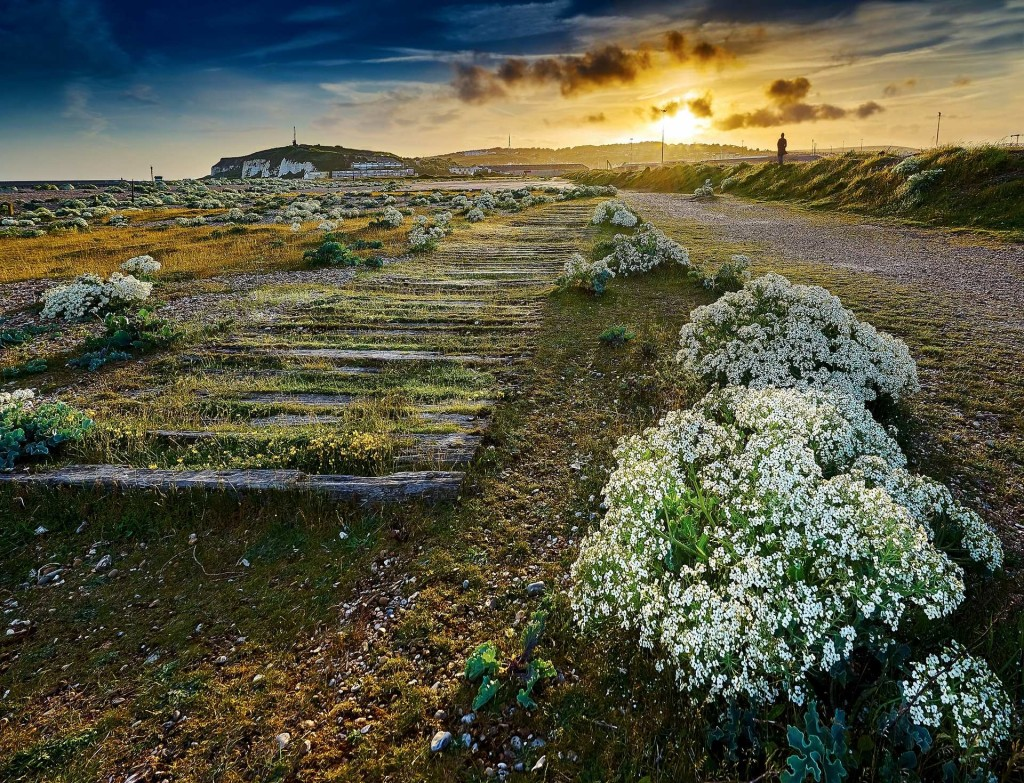 Matthew J Thomas's coastal garden 1024x783 Winners of The International Garden Photographer of The Year