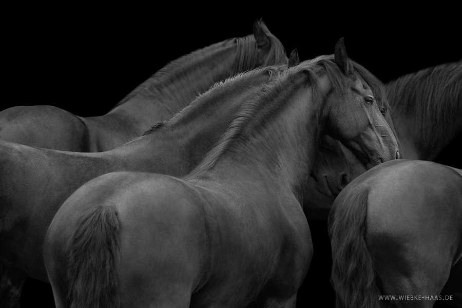 Stunning Horse Portraits Photography 14 Stunning Horse Portraits Photography by Wiebke Haas