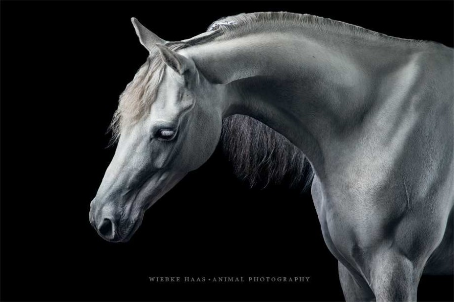Stunning Horse Portraits Photography 63 Stunning Horse Portraits Photography by Wiebke Haas