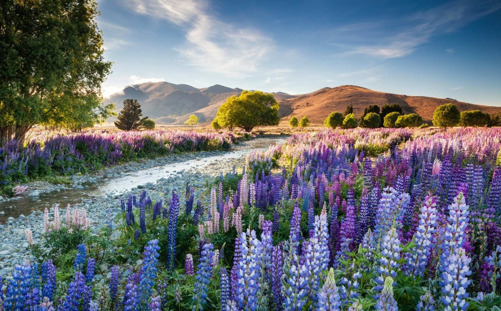 The overall winning entry was of Tekapo lupins taken by Richard Bloom 1024x636 Winners of The International Garden Photographer of The Year