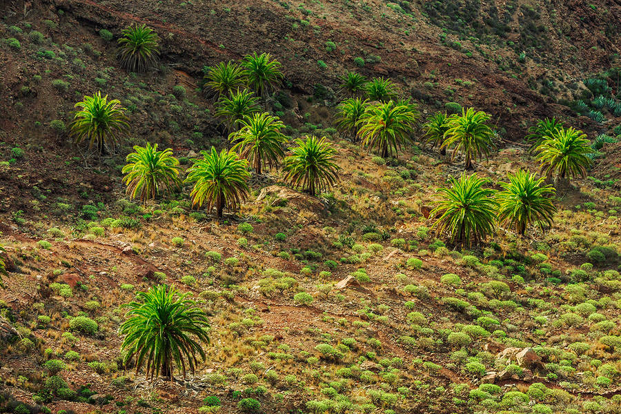 Wonderful Nature Photography of Canary Islands 06 Wonderful Nature Photography of Canary Islands