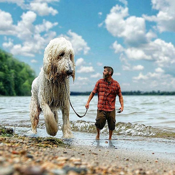 Amusing Photoshop manipulations With Giant Dog by Christopher Cline 02 Wonderful Imaginative Adventures With Giant Dog by Christopher Cline