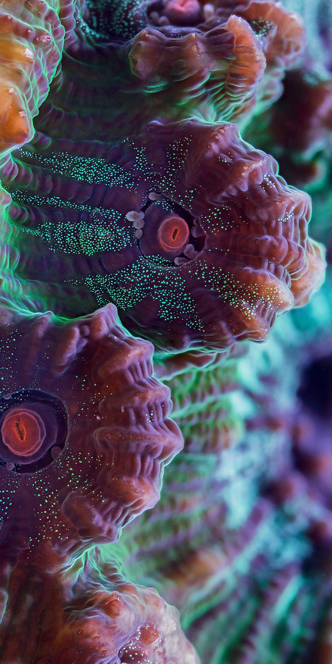 Beautiful Close up Underwater Photography 99 15 Beautiful Examples of Underwater Photography