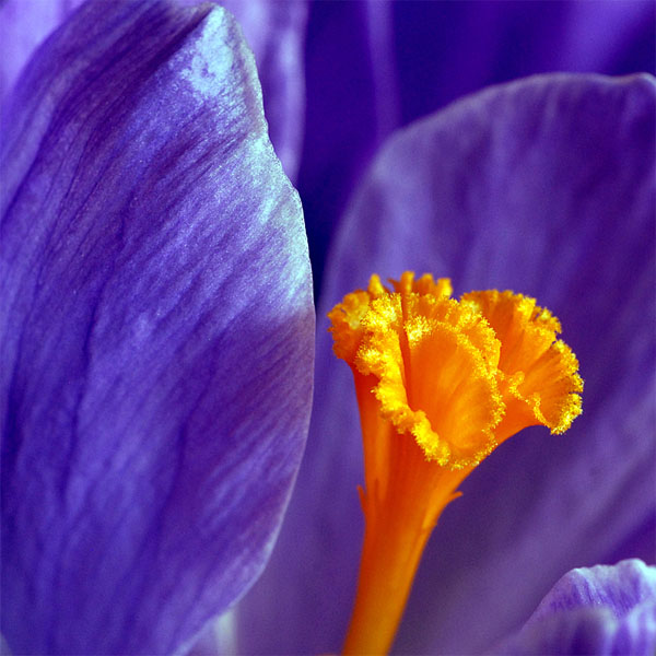 Beautiful Macro Photography of Flower 11 17 Stunning Macro Flower photography