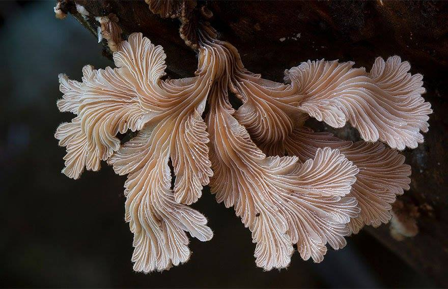 Beautiful Macro Photography of Mushrooms 17 22 Extraordinary Macro Photography of Mushrooms