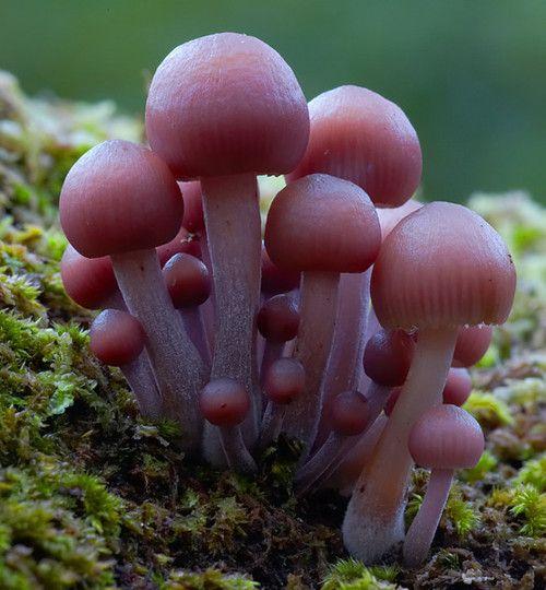 Beautiful Macro Photography of Mushrooms 99 22 Extraordinary Macro Photography of Mushrooms