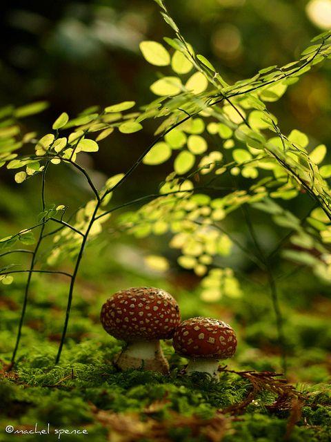 Beautiful Mushrooms Macro Photography 99 22 Extraordinary Macro Photography of Mushrooms