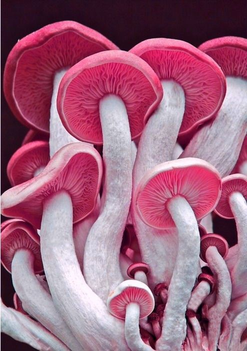 Beautiful Mushrooms Macro Photography 22 Extraordinary Macro Photography of Mushrooms