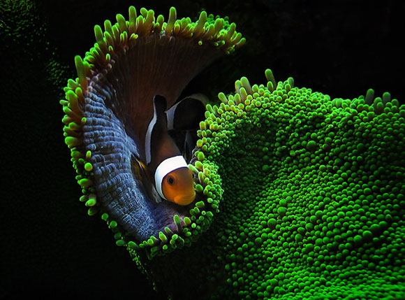 Beautiful Underwater Photography 99 15 Beautiful Examples of Underwater Photography