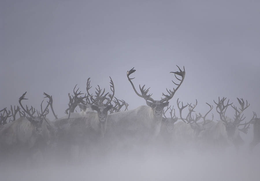 Beautiful Wildlife Photography by Vincent Munier 01 Beautiful Wildlife Photography by Vincent Munier