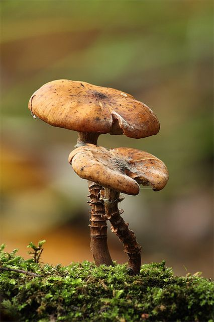 Beauty Macro Photography of Mushrooms 99 22 Extraordinary Macro Photography of Mushrooms