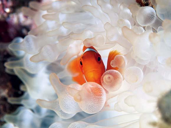 Beauty Underwater Photography of Animals 99 15 Beautiful Examples of Underwater Photography
